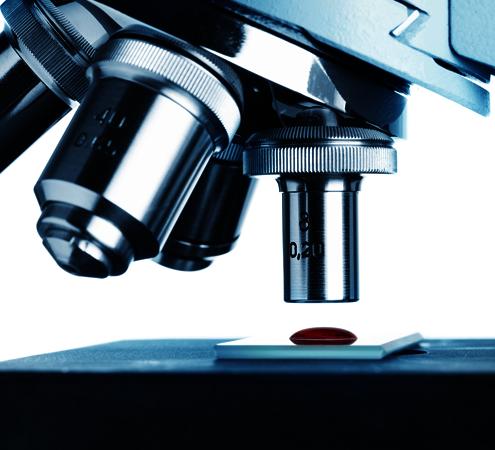 mikroskopowy obraz żywej kropli krwi